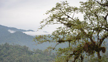 cloud-forest-ecuador