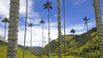 cocora-valley-nera-pereira-coffee-region-colombia
