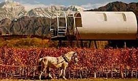 entre-cielos-winery-argentina