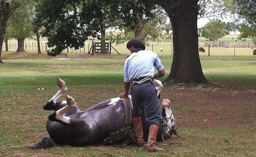 horse-whisperer-argentina