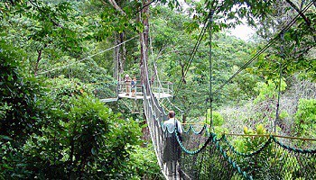 iwokrama-rainforest-canopy-guyana