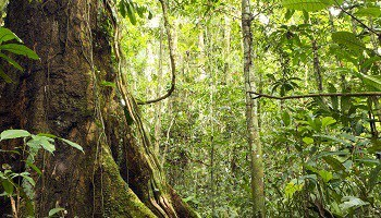 rainforest-amazon