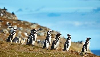 valdes-peninsula-magellanic-penguins-argentina