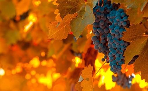 wineries-mendoza