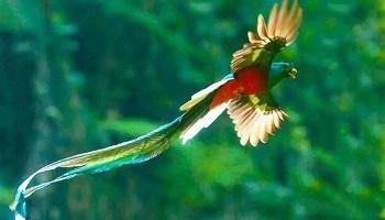 resplendent-quetzal-panama