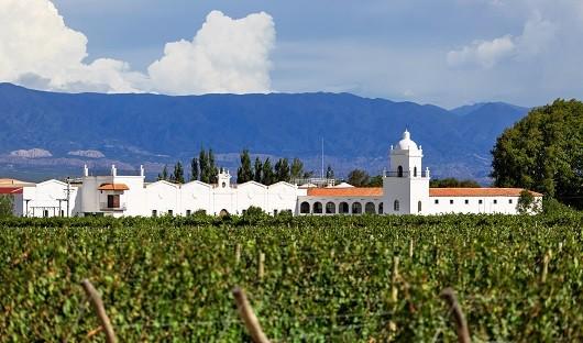 vineyard-in-cafayate-northwest-argentina-copy