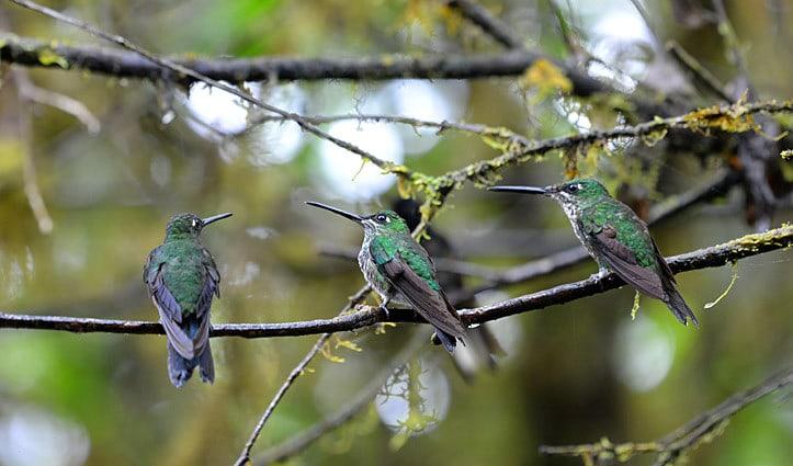 Birds Mashpi Lodge