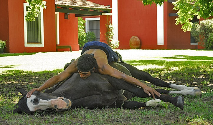 Doma india horse whisperer