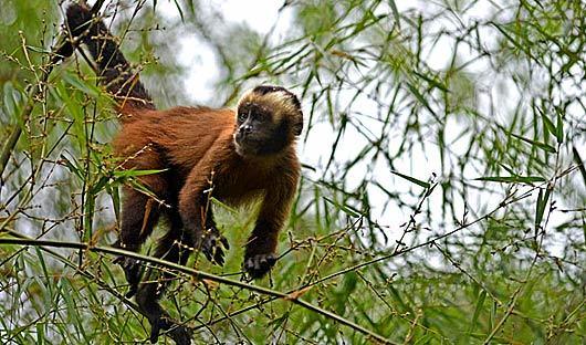 monkey-amazon