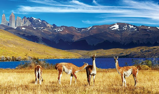 Wildlife Patagonia Chile Torres Del Paine
