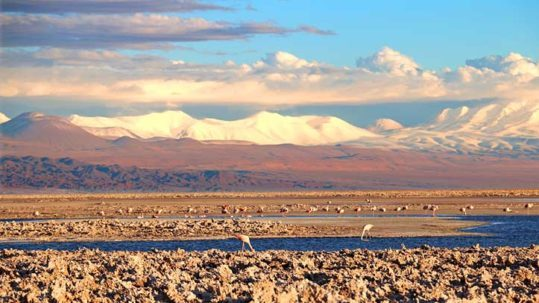 flamingos at the salt flats in Atacama