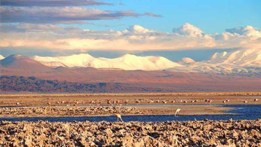 flamingos at the salt flats in Atacama