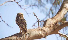 Birdlife Tierra Atacama
