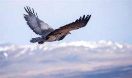 Birdwatching Tierra Patagonia