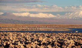 Flamingos in Salt Flats Atacama
