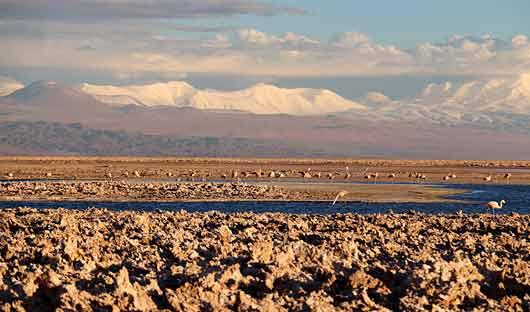 Flamingos in Salt Flats Atacama