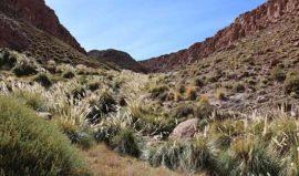 Guatin Atacama