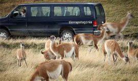 Hunters Excursion Tierra Patagonia