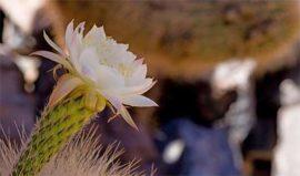 Tierra Atacama Flora