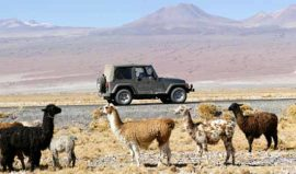 Private excursions, Awasi Atacama