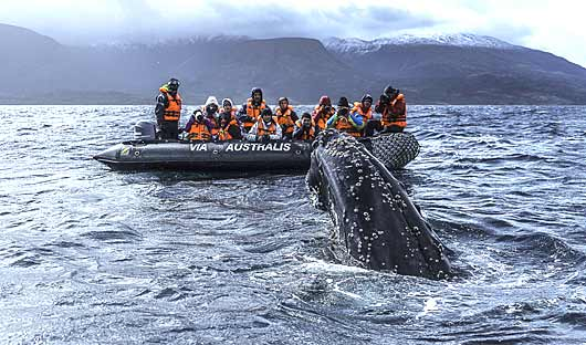 Australis excursion, Patagonia Cruising