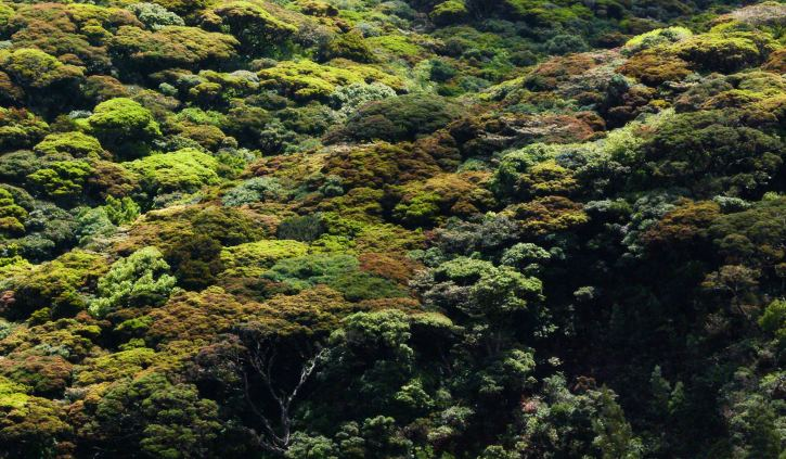 Forest Canopy, Guyana