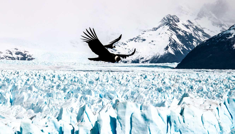 Andean Condors over Perito Moreno glacier - Adrian Hill