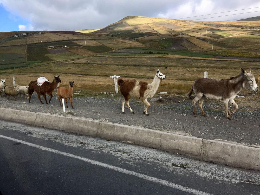Ecuador by Helen Ferguson