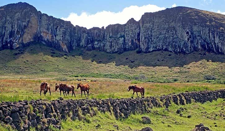 Horses Rapa Nui