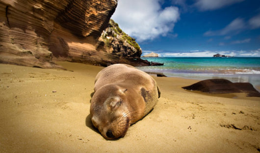 Galapagos-seal-by-Adam-Fry