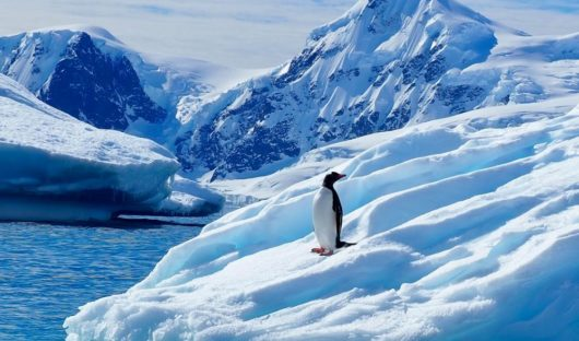 Lone Penguin, Antarctic Peninsula by Emma Magrath