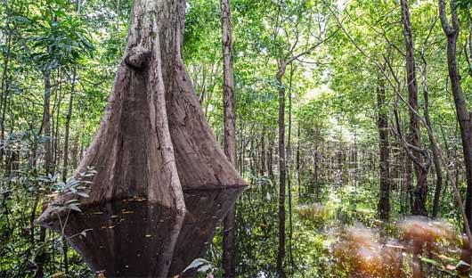 Anavilhanas Lodge Rainforest