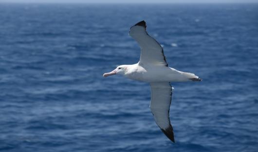 At Sea Image