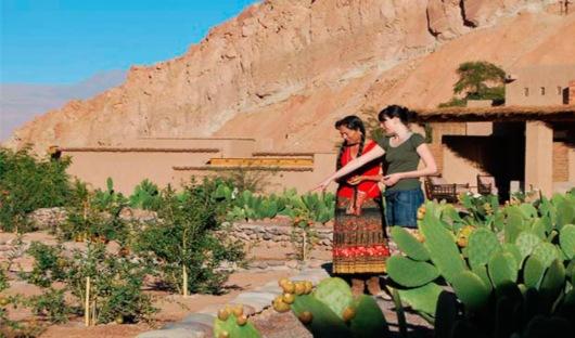 Garden Alto Atacama