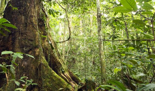 Rainforest - Amazon