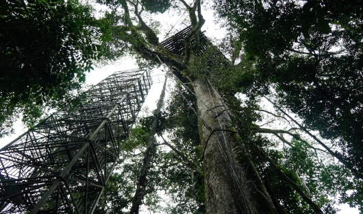 Yasuni National Park Canopy Tower
