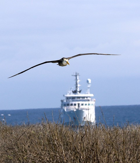 Albatross by Carrie Gordon
