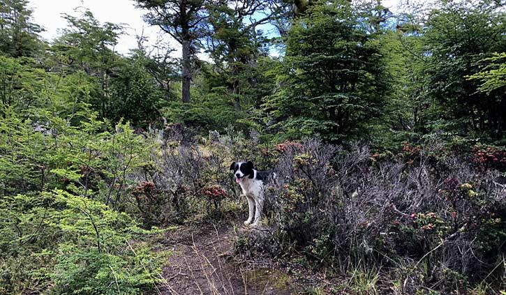 Dog at Gable Island, Day Tour Ushuaia