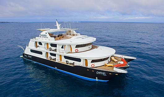 Petrel Galapagos Islands