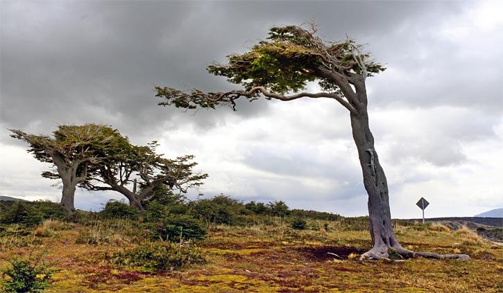 Trees gable island, Ushuaia day tour