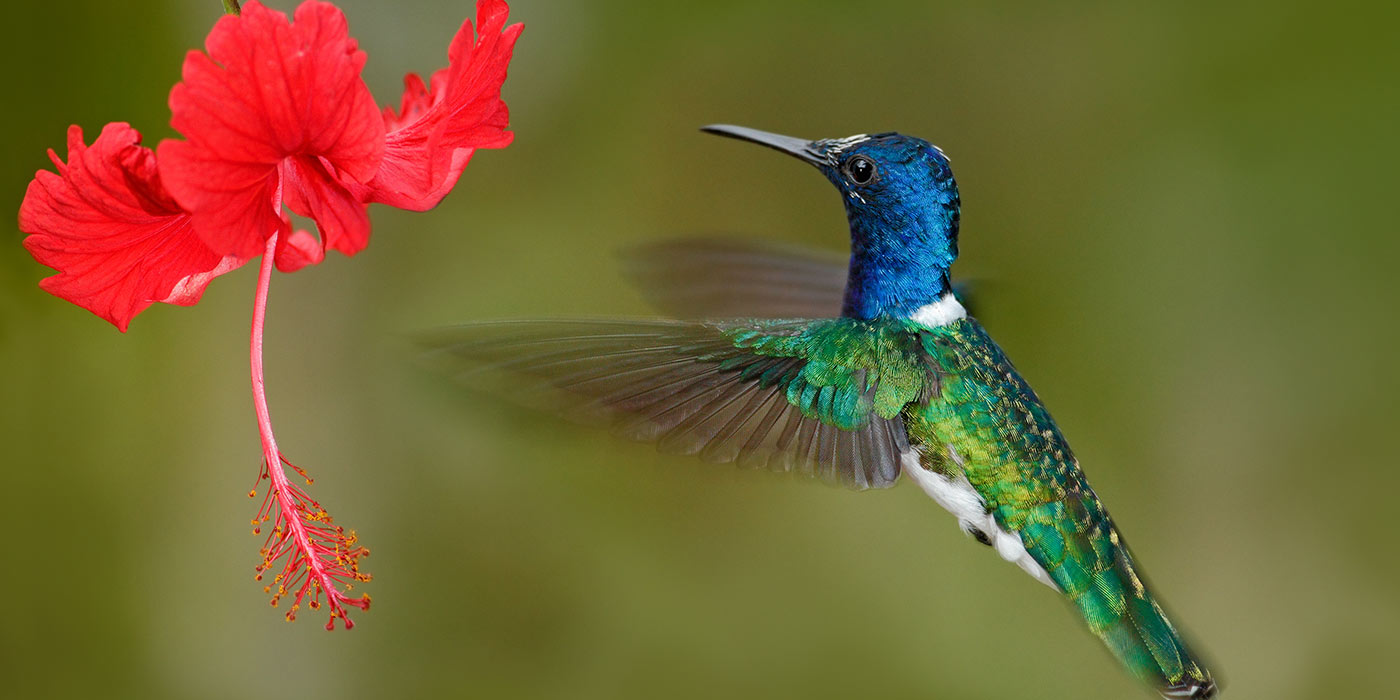 Hummingbird - Blog Size